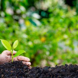 Food Security Skills Training