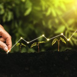 hand-planting-seedling-growing-step-garden-with-sunshine